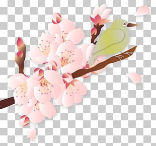 Cherry Blossom Quality Illustration PNG