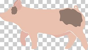 Domestic Pig Cattle PNG