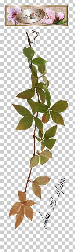 Twig Plant Stem Leaf Petal Font PNG