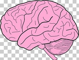 Human Brain Drawing Free Content PNG