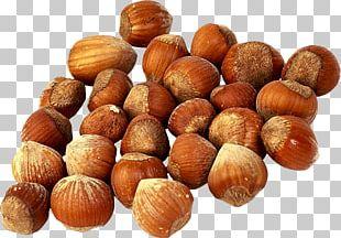 Hazelnut Tree Nut Allergy Chestnut Food PNG