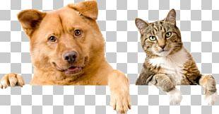 Kindness Animal Hospital Dog Pet Sitting Cat PNG