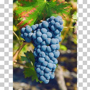 Grape Rouge Du Pays Petite Arvine Canton Of Valais Pinot Noir PNG