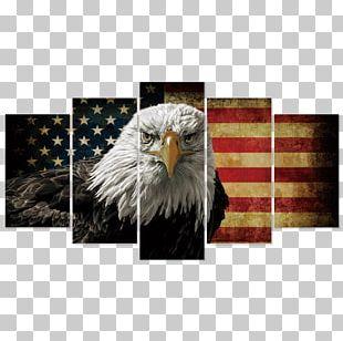 Bald Eagle United States Canvas Print Art PNG