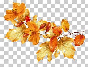 Flower Autumn Leaf Color PNG