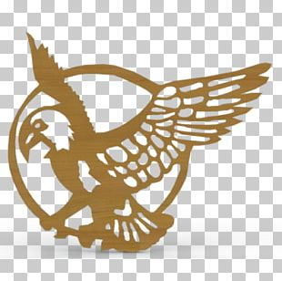 Hawk Medium-density Fibreboard Bird Of Prey PNG