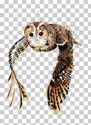 Tawny Owl Bird Drawing Watercolor Painting PNG
