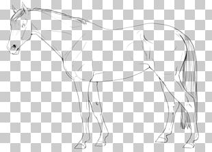 Arabian Horse Line Art American Quarter Horse Pony Stallion PNG