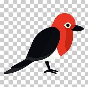 Bird Woodpecker True Parrot PNG