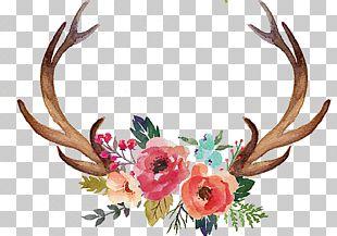 Deer Antler Flower Moose PNG
