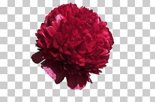 Cut Flowers Rose Floristry PNG