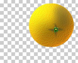 Yellow Circle Citrus PNG