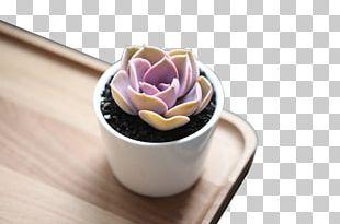 Leatherpetal Succulent Plant Bonsai PNG
