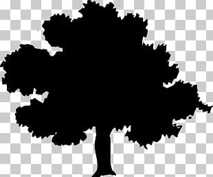 Northern Red Oak Tree PNG