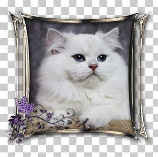 Persian Cat Asian Semi-longhair British Semi-longhair Ragamuffin Cat Whiskers PNG
