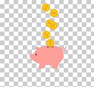 Piggy Bank Saving Coin Domestic Pig PNG