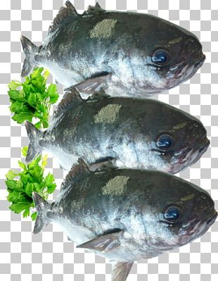 Cod Fish Products 09777 Tilapia Oily Fish PNG