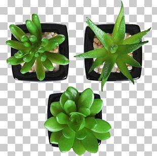 Succulent Plant Artificial Flower Houseplant Flowerpot PNG