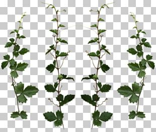 Plant Vine Tree Clipping Path PNG