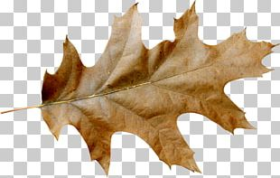 Autumn Leaf Color Portable Network Graphics Graphics PNG
