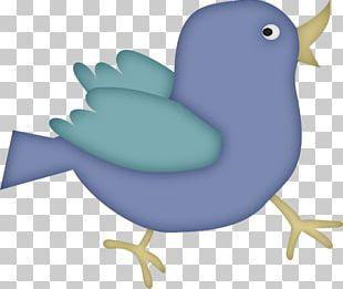 Bird Portable Network Graphics Chicken Cartoon PNG
