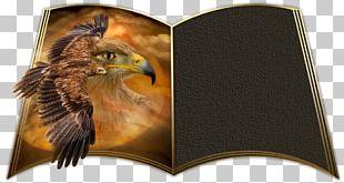 Bird Of Prey Beak Eagle Animal PNG