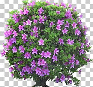 Psd Garden Portable Network Graphics Flower Shrub PNG