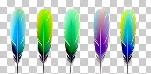 Feather Color Euclidean Material PNG