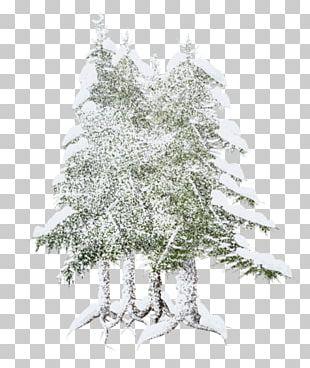 Spruce Fir Christmas Tree Pine Christmas Ornament PNG
