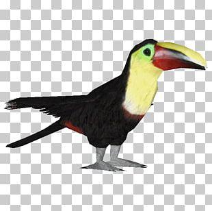 Bird Ramphastos Parrot Woodpecker Owl PNG