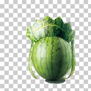 Watermelon Creativity Designer Adobe Illustrator PNG