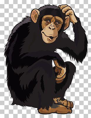 Chimpanzee Ape Monkey PNG