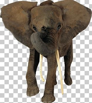 African Elephant Png Images African Elephant Clipart Free
