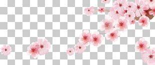 Cherry Blossom Cartoon PNG