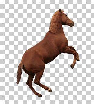 Mustang American Paint Horse American Quarter Horse Mane Arabian Horse PNG