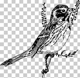 Bird Sparrow Line Art Drawing Black And White PNG