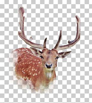 Deer Elk PNG