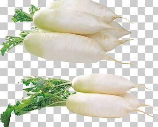 Portable Network Graphics Leaf Vegetable Garden Radish PNG