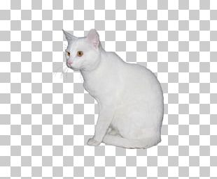Manx Cat European Shorthair Japanese Bobtail Burmilla Kitten PNG
