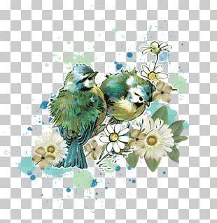 Watercolor Birds PNG