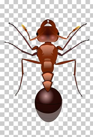 Red Imported Fire Ant PNG