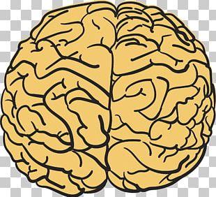 Human Brain T-shirt Agy Drawing PNG