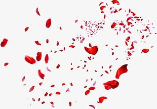 Scattered Red Rose Petals PNG