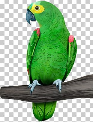 Amazon Parrot Bird Sellecta Rovani Macaw PNG