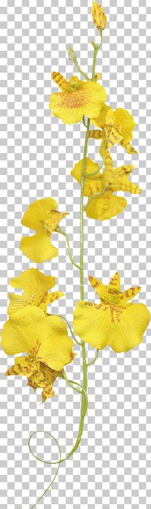 Orchids Flower Plant PNG