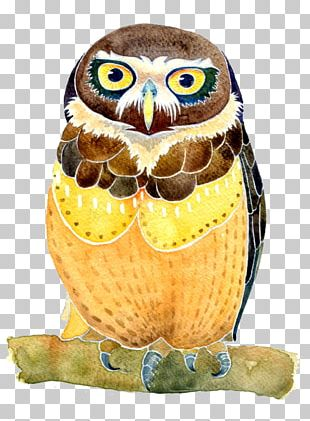 Owl Watercolor Painting Illustration PNG