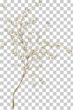 Plant Stem Leaf Flowering Plant Victorian Era PNG