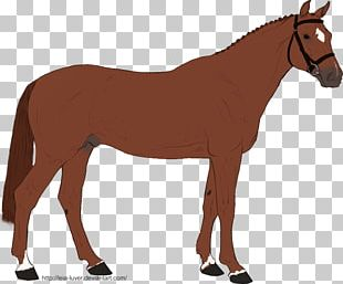 Mule Horse Many Things Photography Rein Pony PNG