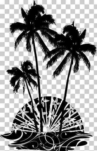 Asian Palmyra Palm Arecaceae Wall Decal Tree Coconut PNG