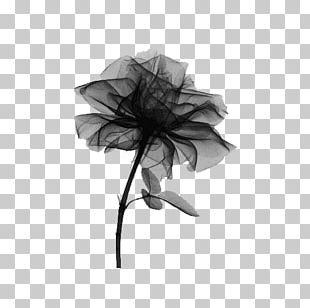 X-ray Rose Radiography Light PNG